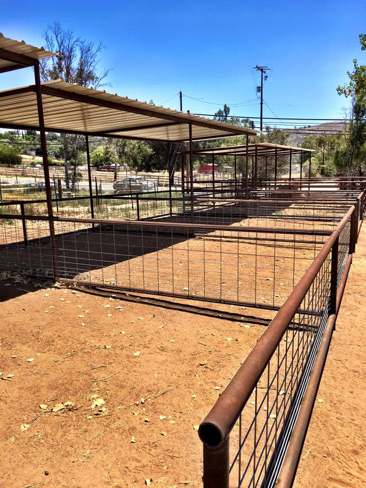 Petting Zoo Upgrade